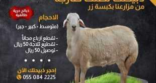 عروض مطعم سما بلدي